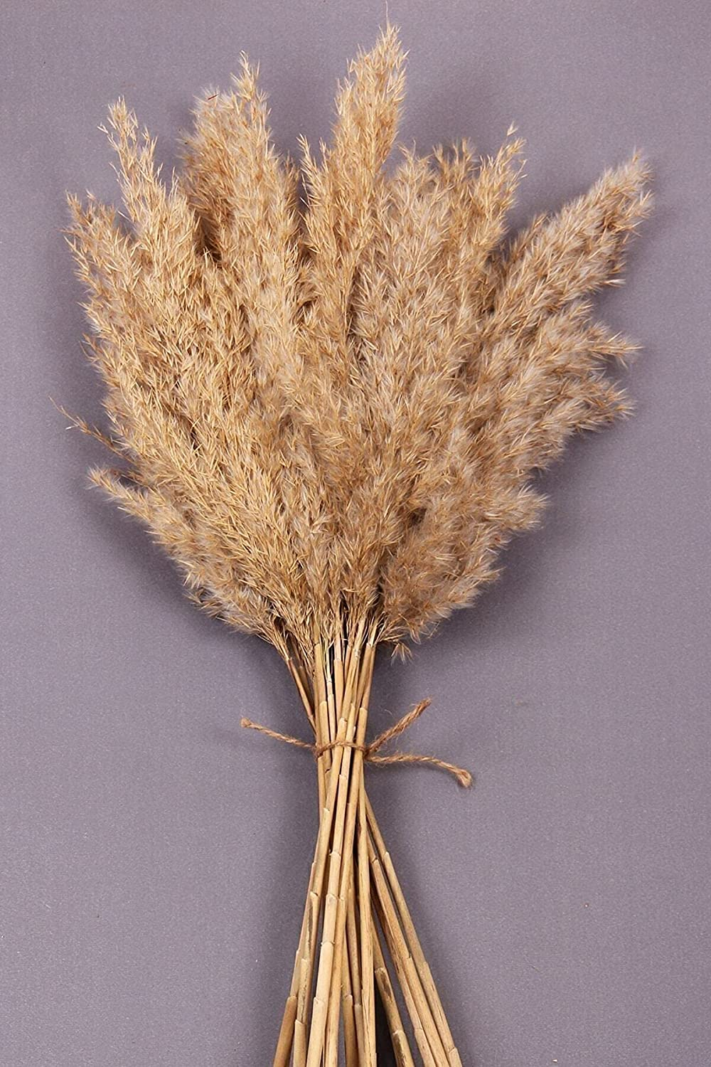MAISONB 15pcs Dried Pampas Grass Decor Wedding Flower Bunch Natural Plants for Home Christmas Decorations Decoration Creation i. Style 6522