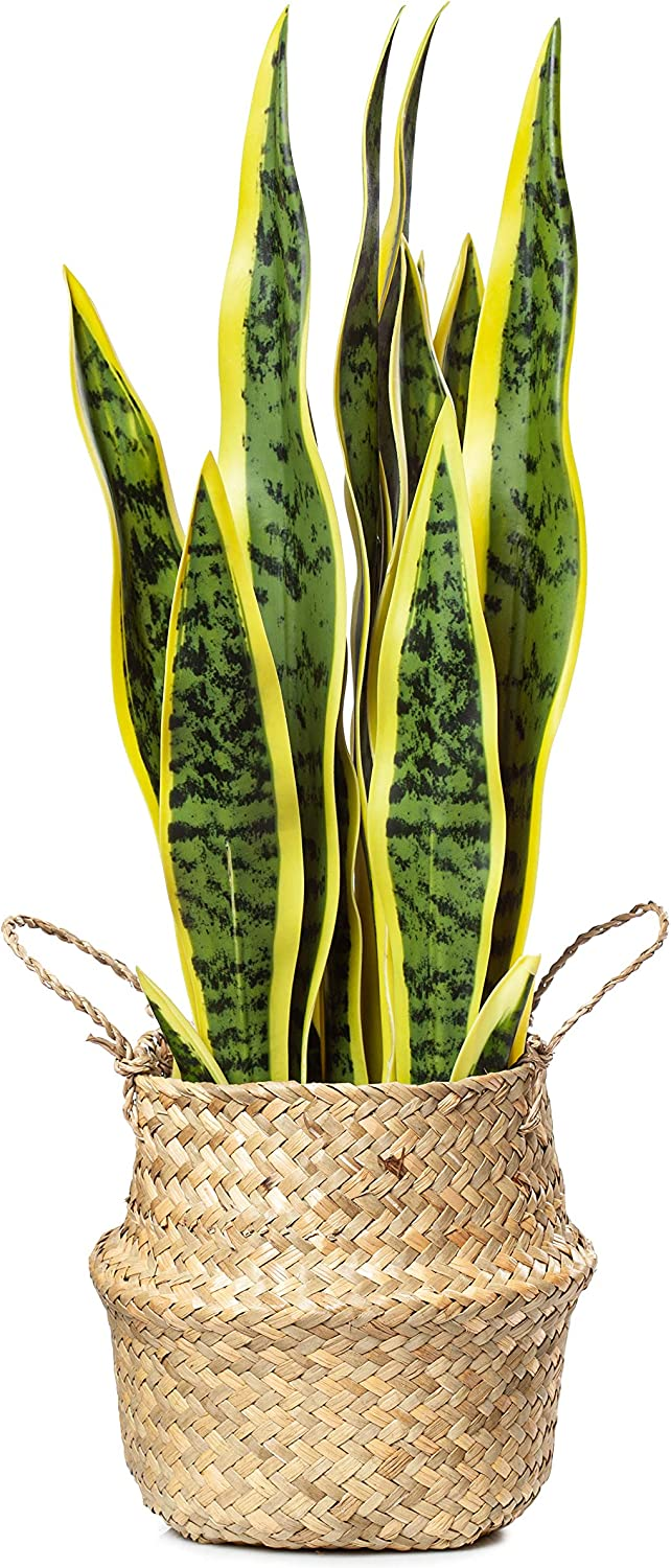 """PLANTAE Artificial Snake Plant 20"""" Inch Tall 16 Realistic Leaves Faux Sansevieria for Home and Office Decor Indoor with Handmade Natural Seagrass Woven Basket Included"""
