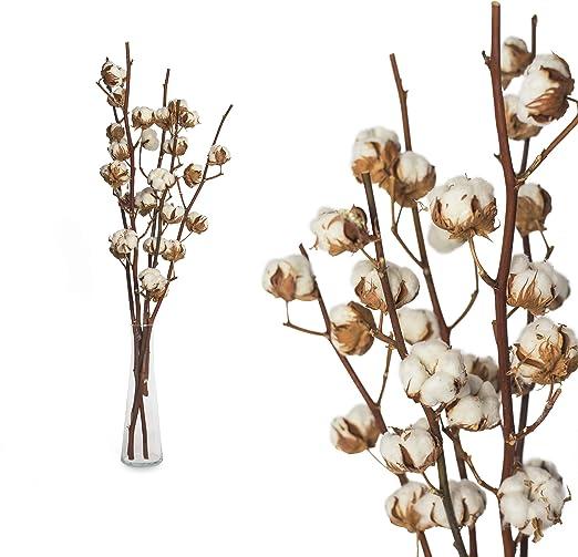 Inter Flower 10 auténtico Ramas Algodón 10-12 Flores disecadas, 85 cm muy vida útil larga, natural de bueno adecuado como decoración, Florística, para manualidades/Como popular fair trade alta calidad: Amazon.es: Jardín