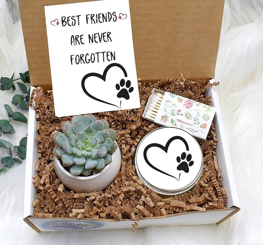 Sympathy Box Loss of Pet Sorry for Your Loss Small Gift Box Succulent Gift Box Loss of Job