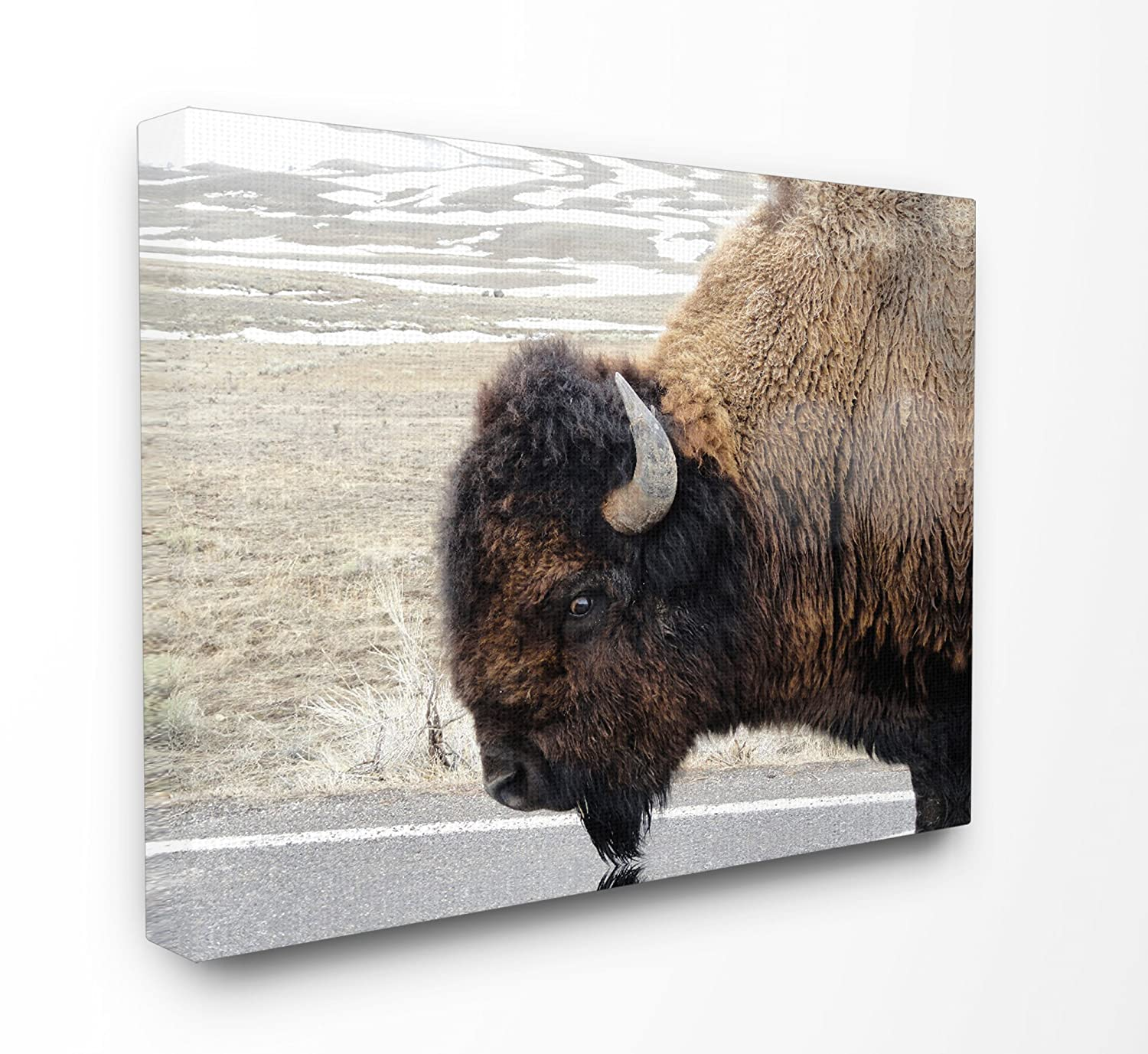 Stupell Industries Beautiful Buffalo Photography XXL Stretched Canvas Wall Art, Proudly Made in USA