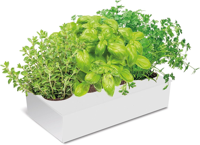 Huerto Urbano KIT Cultivar Especias en tu Cocina - Caja con 4 ...