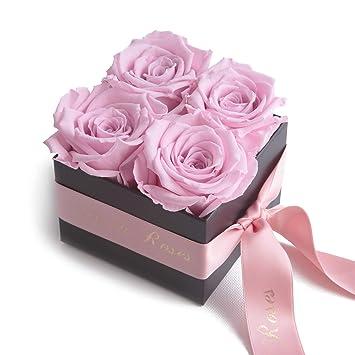 Roses Eternelles La Vie En Roses Rose Amazon Fr Jardin
