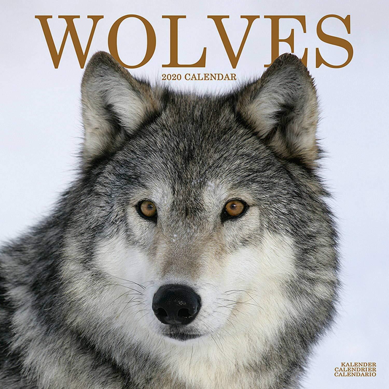 Can Calendrier 2020.Wolf Calendar Wolves Calendar Calendars 2019 2020 Wall