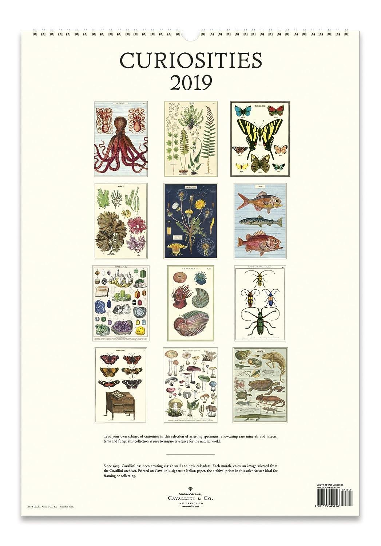Cavallini Papers /& Co Multicolor Inc. CAL19-38 2019 Wall Calendar Curiosities