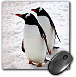 3dRose LLC 8 x 8 x 0.25 Inches Mouse Pad, Penguins (mp_4182_1)