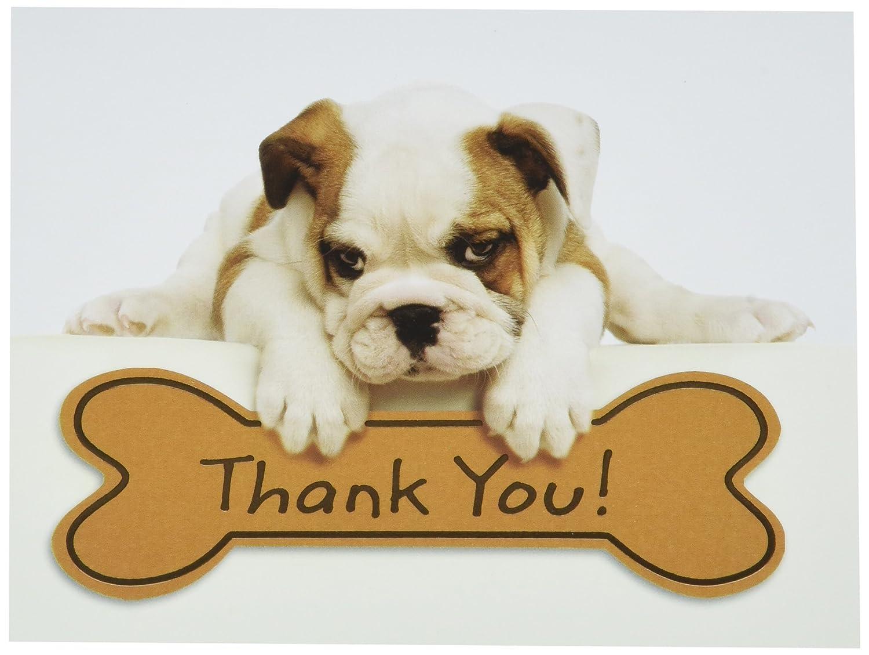 Amazon Design Design Bulldog Puppy Thank You Note Cards 20