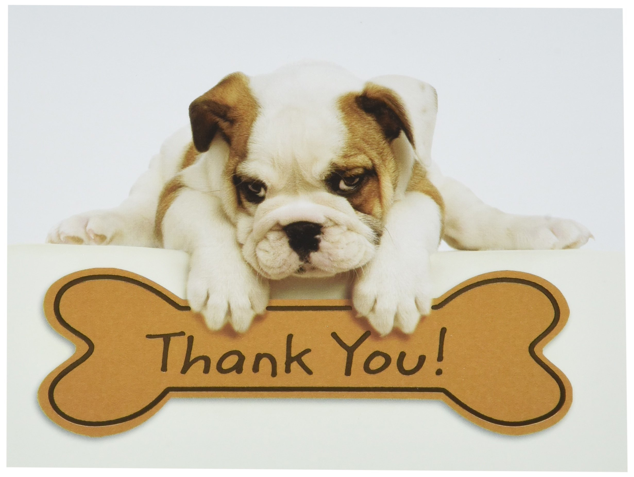 Amazon.com : Design Design Bulldog Puppy Thank You Note Cards 20 ...