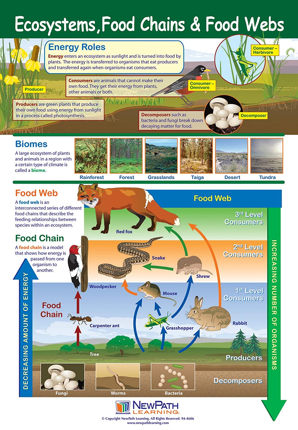 Ecosystems, Food Chains and Food Webs Poster - Laminated, Full-Color, 23