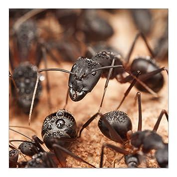 DekoGlas Glasbild \'Ameisen im Nest\' Acrylglas Bild Küche, Wandbild ...
