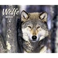 Wölfe 2020: Großer Wandkalender. Foto-Kunstkalender über den Wolf. Querformat 55 x 45,5 cm. Hochwertiges Foliendeckblatt.