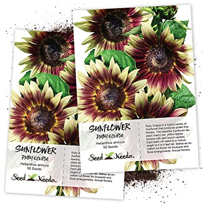 Seed Needs, Ruby Eclipse Sunflower (Helianthus annuus) Twin Pack of 50 Seeds Each : Garden & Outdoor