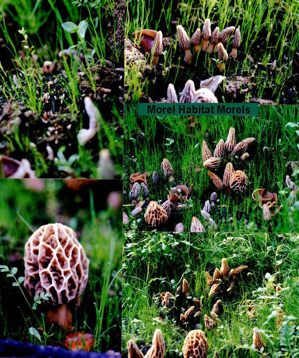 Morel Habitat Kit ® - Backyard Morel Mushroom Growing Kit