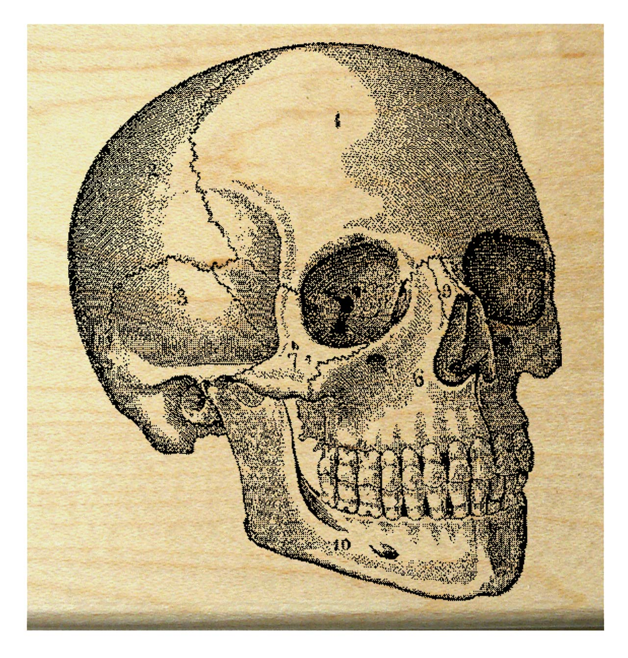 Amazon P30 Skull Rubber Stamp Arts Crafts Sewing