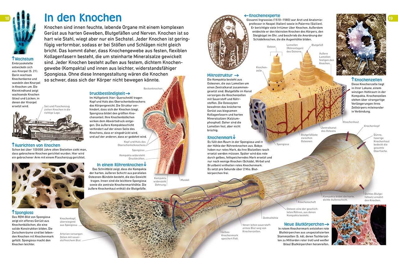 memo Wissen entdecken. Der Körper: Sinne, Muskeln, Blutgefäße. Das ...