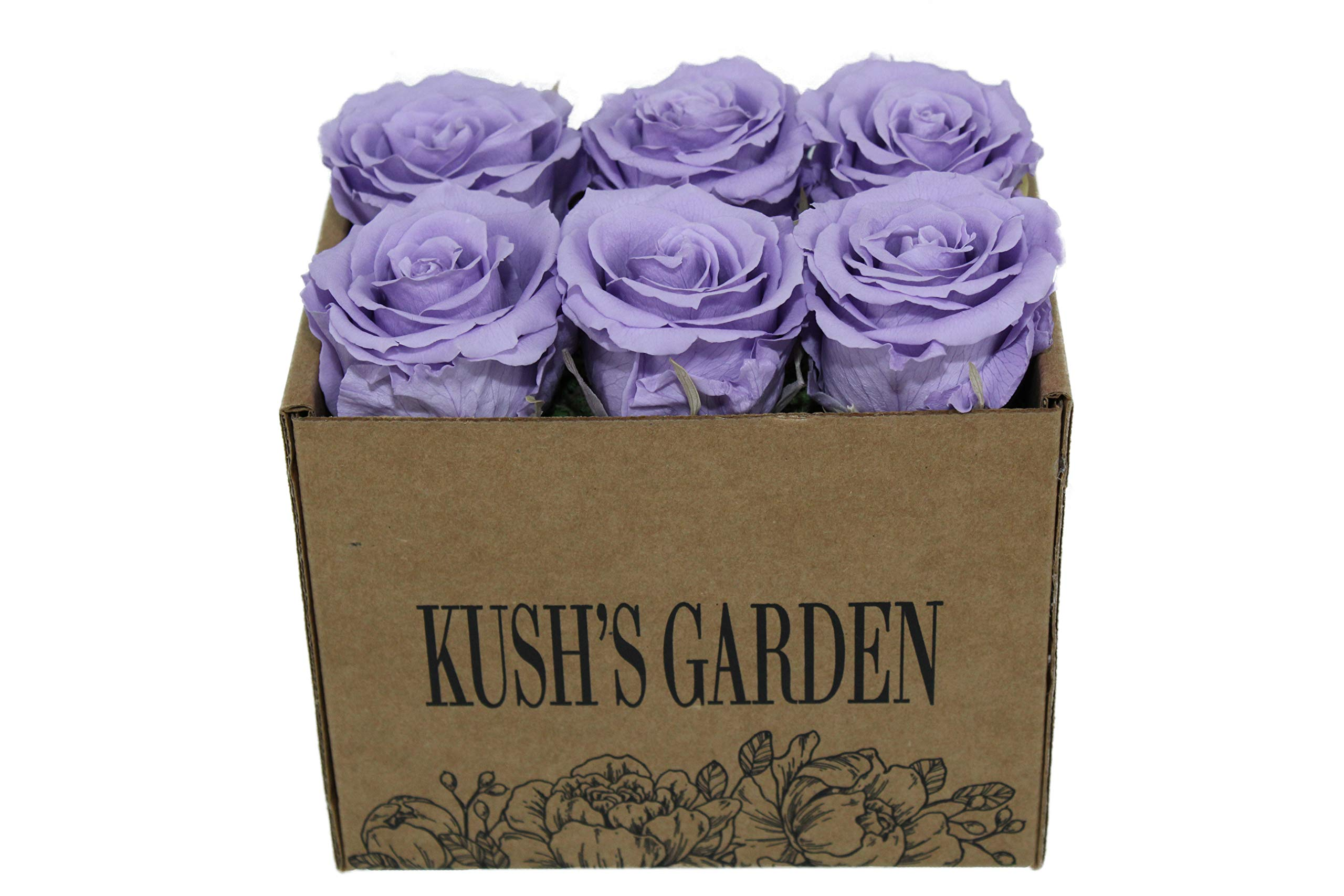KUSHS GARDEN Real Preserved Roses in Box (Purple Haze)