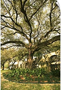 "CANVAS ON DEMAND Tree and Landscaping in San Antonio, Texas Wall Decal, 40""x60"""