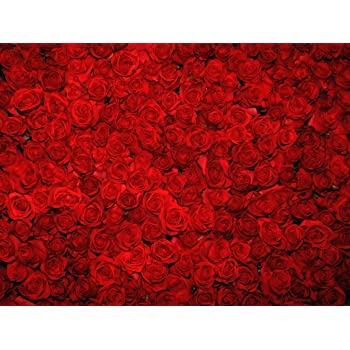 Red Rose Flowers Wall Photography Backdrop For Booth Studio Beautiful Floral Design Photo Backgrounds Photographic Digital
