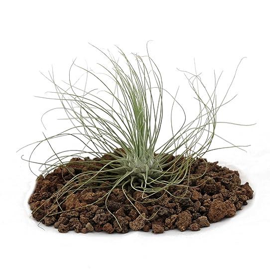 Plante vivant sans terre good ides dco magnifiques avec - Plante sans terre ...