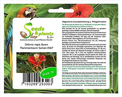 3 Delonix regia árboles flamboyant jardín semillas sembrar semilla #367: Amazon.es: Jardín