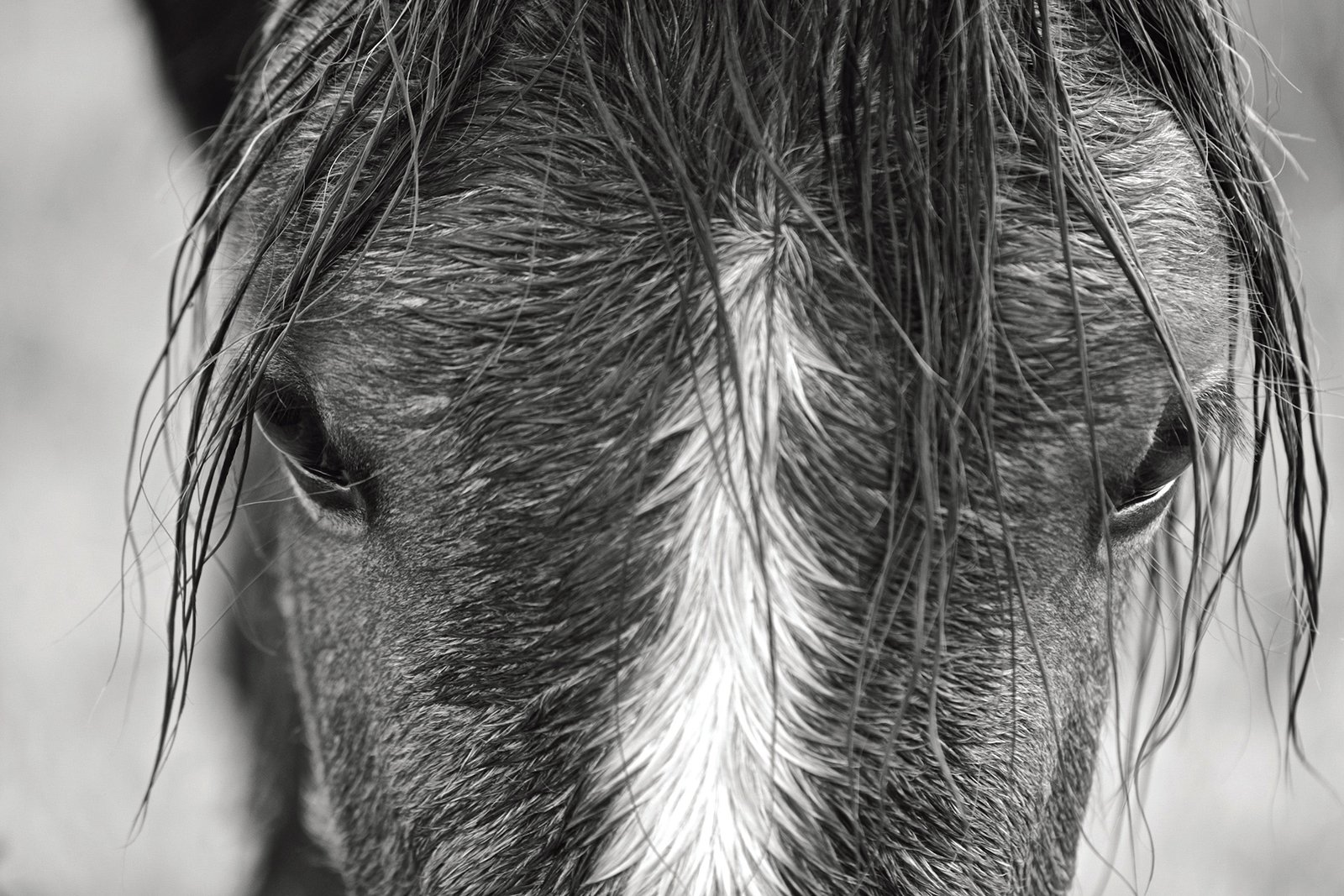 Wild Horses of Cumberland Island by Images Publishing Dist Ac