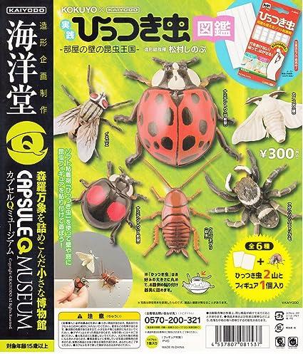 Capsule Q Museum Hittsuki - Guia de práctica para Insectos (Todas Las Paredes del Reino Unido, Juego de 6 Tipos de Gazza Gacha Gacha): Amazon.es: Hogar