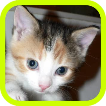 Cute & Adorable Kittens!!! FREE Kitten Meow Pets Wallpapers for Kids! Cat  Lovers and World Animal Kitty Lovers Must Have This Photo Game App to Play!