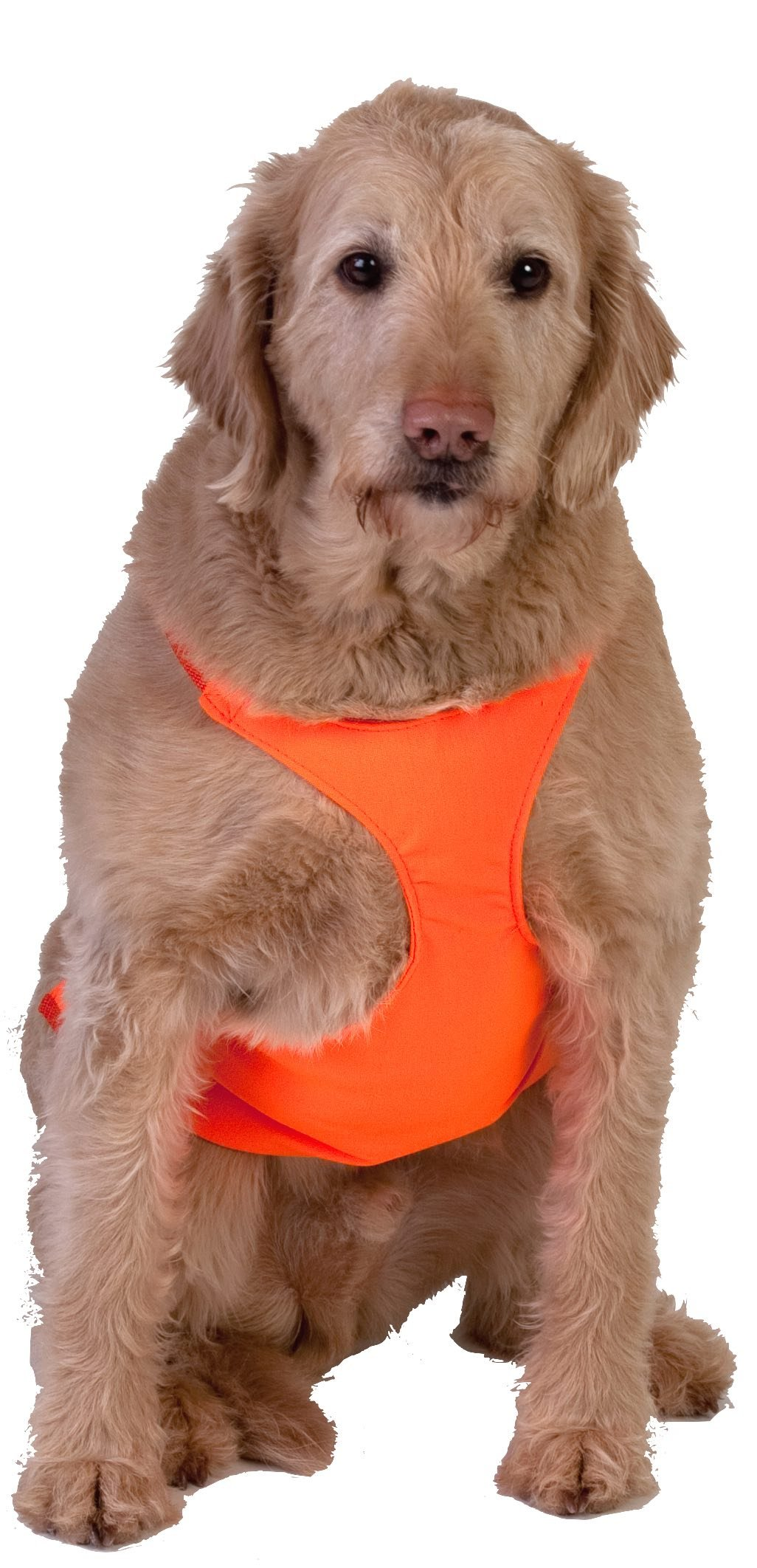 Dog Not Gone No Fly Zone Safety Chest Vest, Large, Orange by Dog Not Gone