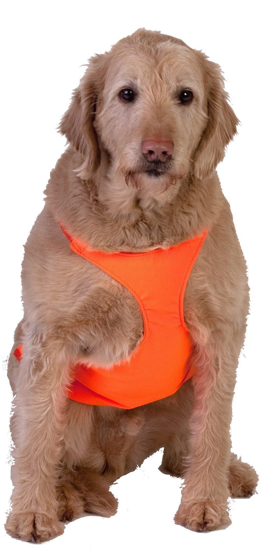 Dog Not Gone No Fly Zone Safety Chest Vest, Large, Orange