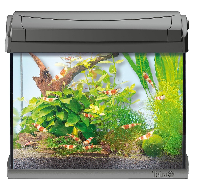 Tetra 171855 AquaArt Shrimps Aquarium-Komplett-Set 20 L, ideal für ...
