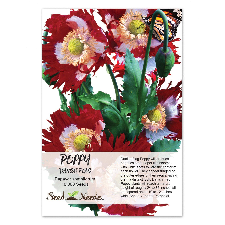 Amazon Package Of 10 000 Seeds Danish Flag Poppy Papaver