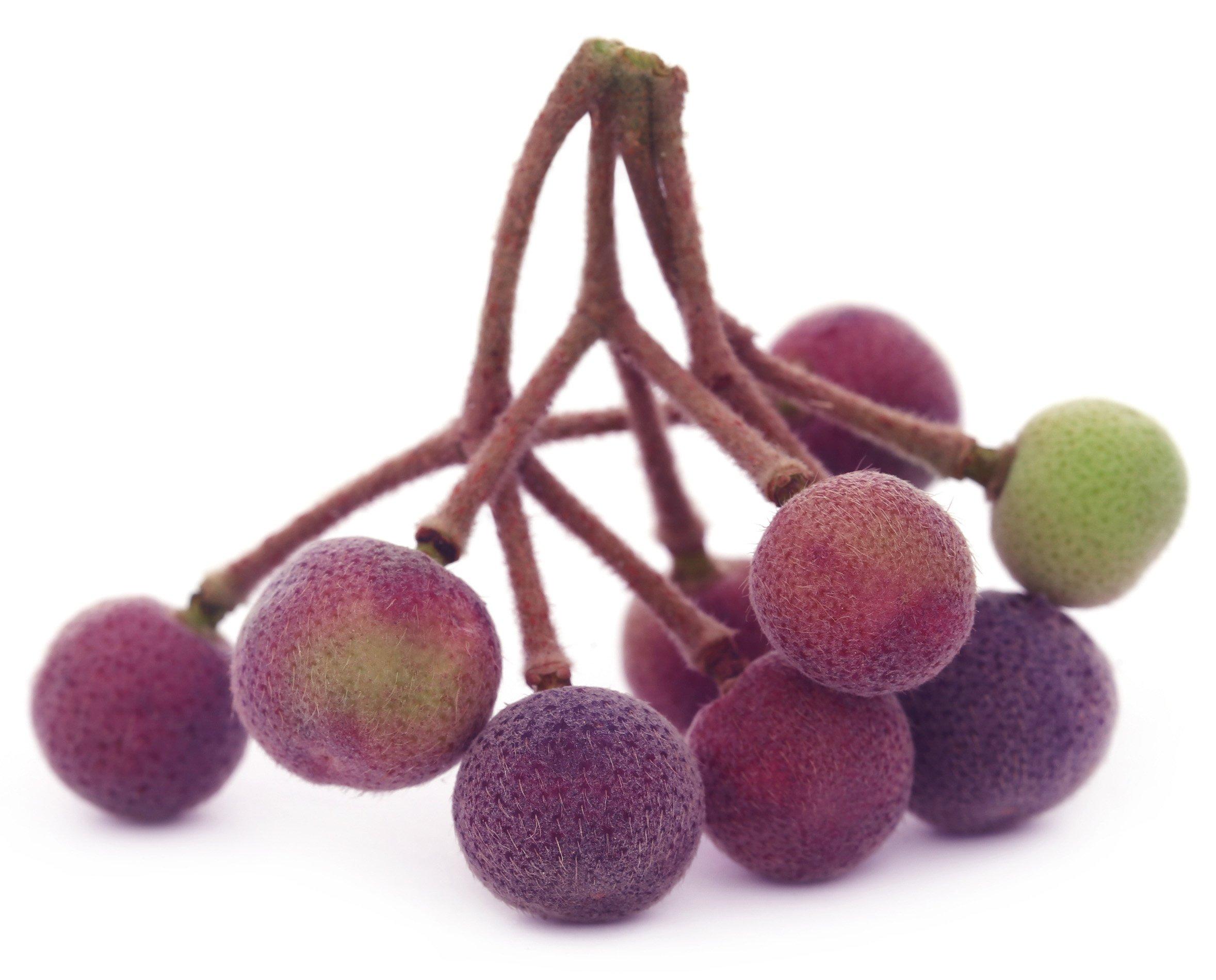 Sherbet Berry Live Plant Fruit Tree Grewia asiatica Phalsa Falsa subinaequalis