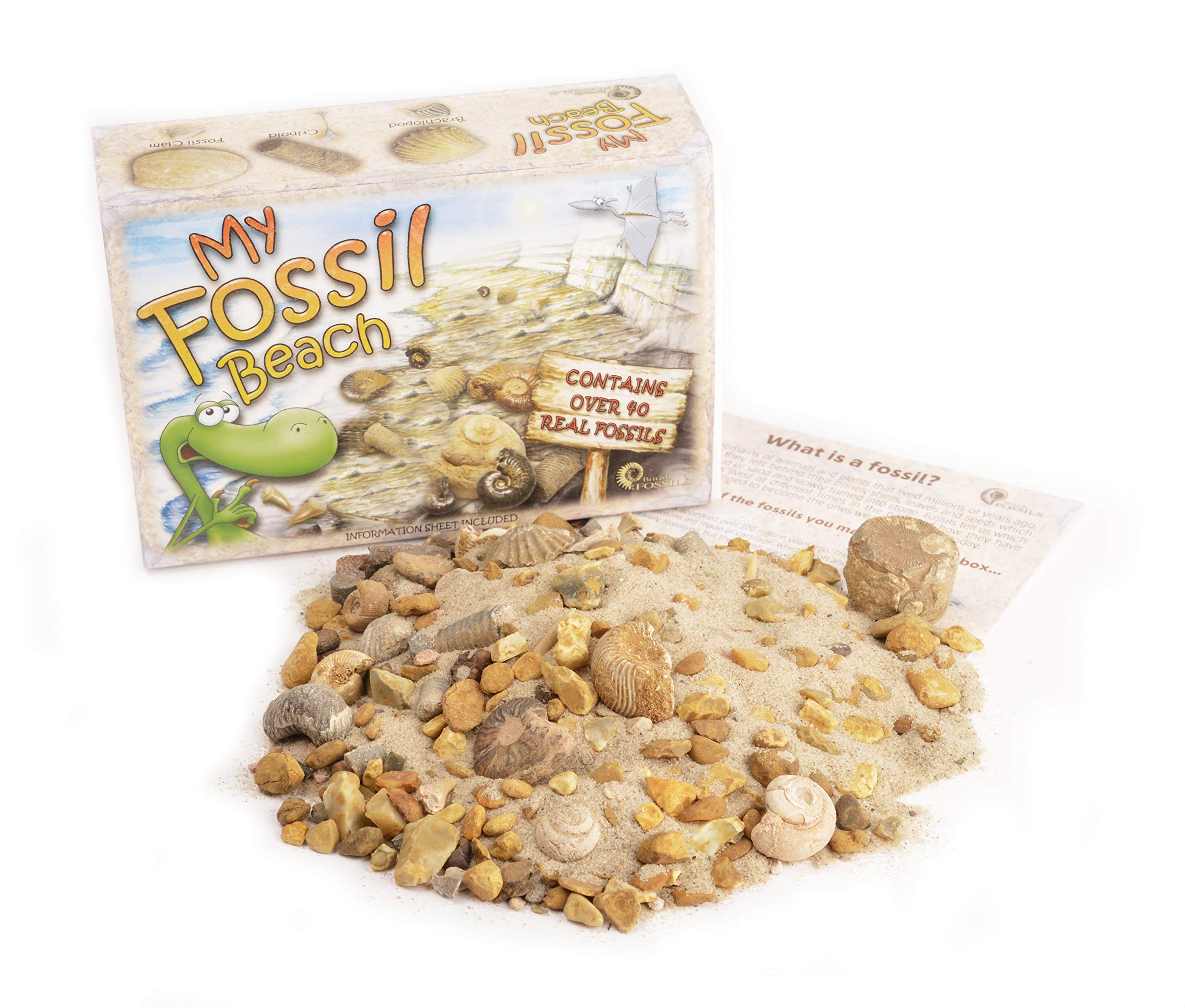 My Fossil Beach - Contains Over 40 Genuine Fossils!