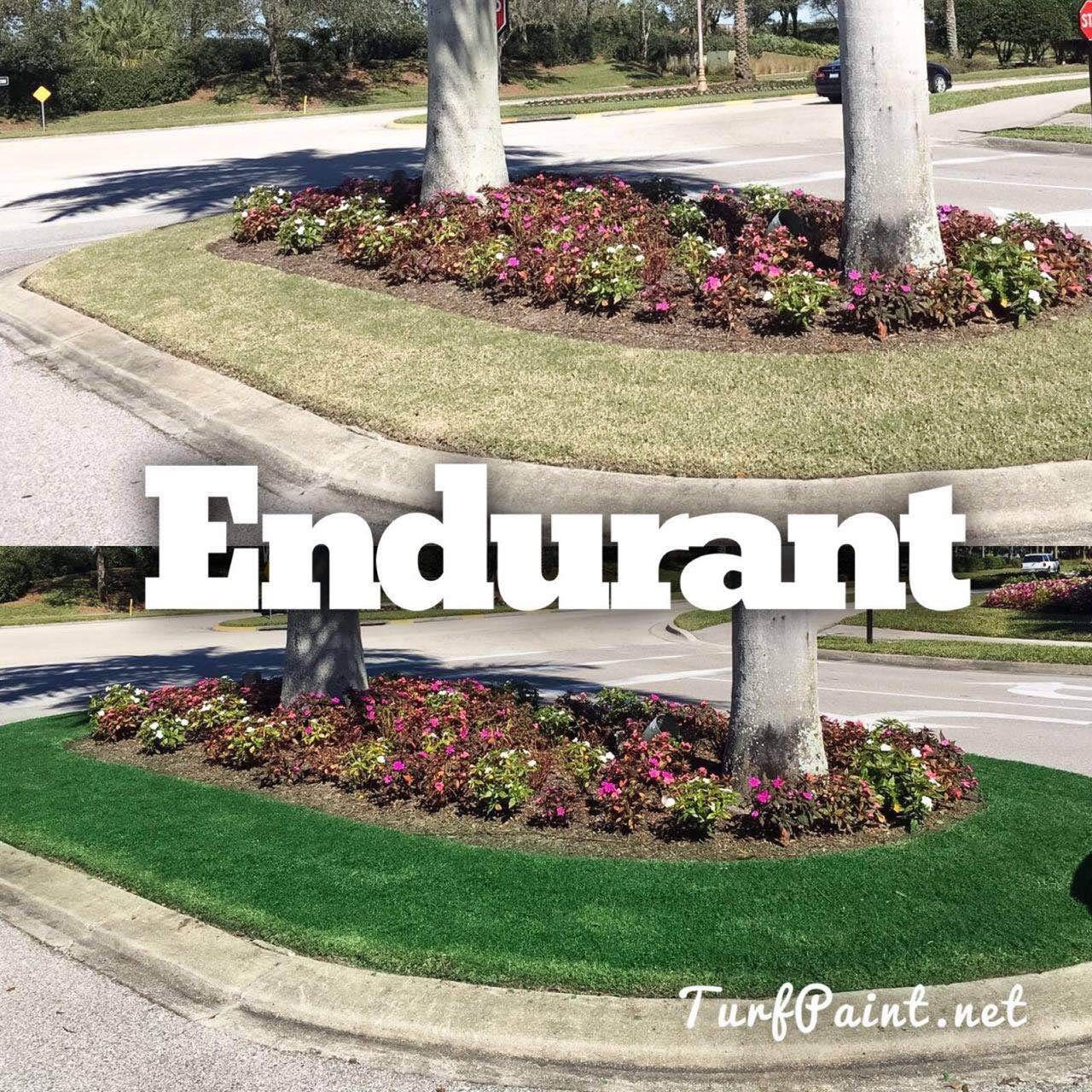 Concentrated Turf and Grass Colorant - 1 Gallon Jug Revitalizes Approximately 10,000 Sq. Ft of Dormant, Drought-Stricken or Patchy Lawn (Premium) by   Endurant (Image #5)
