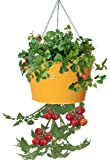 HIT 8399E SAFF Galvanized Heavy Gauge Steel Hanging Tomato Herb Planter, 13.5 by 8-Inch, Saffron