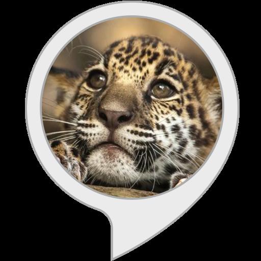 jaguar-facts