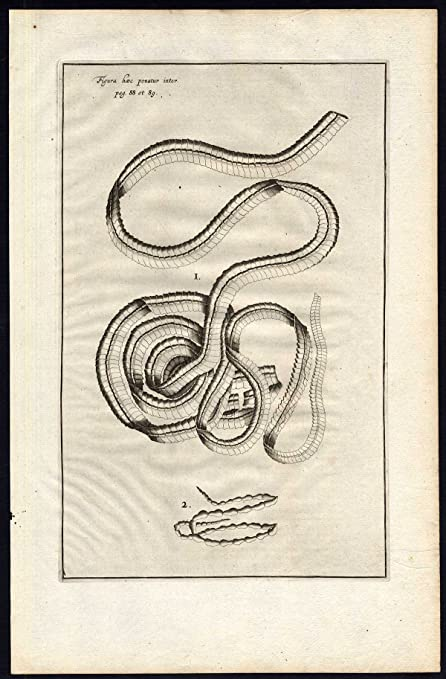 Amazon.com: 2 Antique Anatomical Prints-TAPEWORM-LUMBRICO LATO-BOOK ...