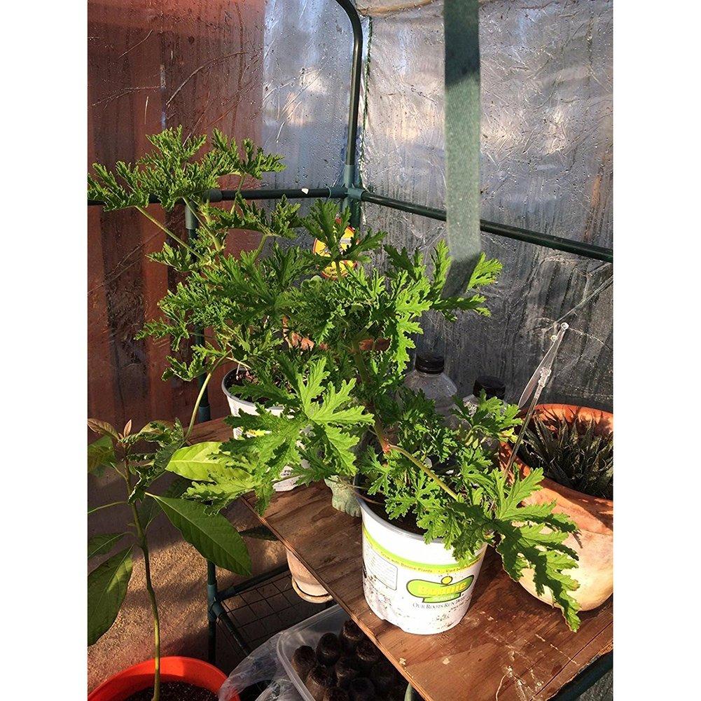 Tomate Hortalizas de efecto invernadero Zyurong PE para crecimiento de plantas tienda de tomate jard/ín con puerta de entrada con cremallera