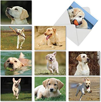 Set of 4 Bulldog Puppy Dog Dogs Puppies Stationery Greeting Notecards// Envelopes