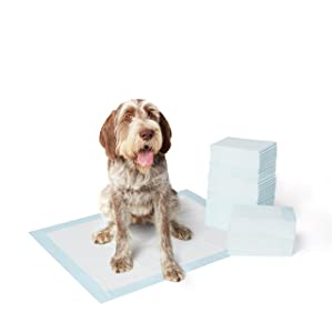 AmazonBasics Pet Training and Puppy Pads, Regular and Heavy Duty