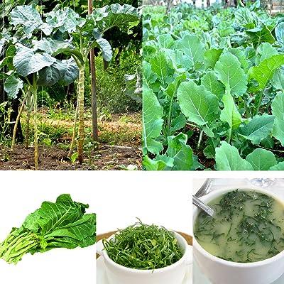 Garden Flower Plant Seeds 100Pcs Collard Greens Seeds Couve Galega Portuguese Walking Stick Cabbage Kale : Garden & Outdoor
