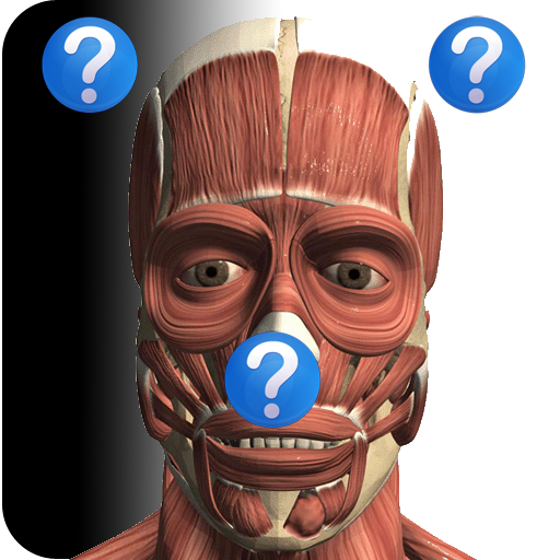 Anatomy Quiz Lite -