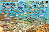 Cozumel Dive Map & Reef Creatures Guide Franko Maps