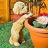 HOME HUT® - Adorno con diseño de cachorro para decoración de macetas al aire libre, resistente a la intemperie