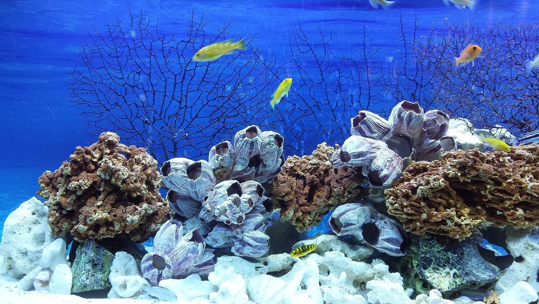 Juego de piedras mezcladas de 20 kg para Malawi CICHLID TANGANYIKA AQUARIUM OCEAN ROCK: Amazon.es: Productos para mascotas