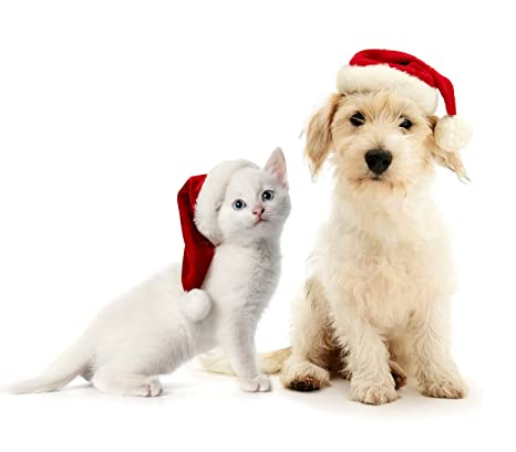 Immagini Animali Natale.790733 Cappello Da Babbo Natale Per Animali Di Taglia