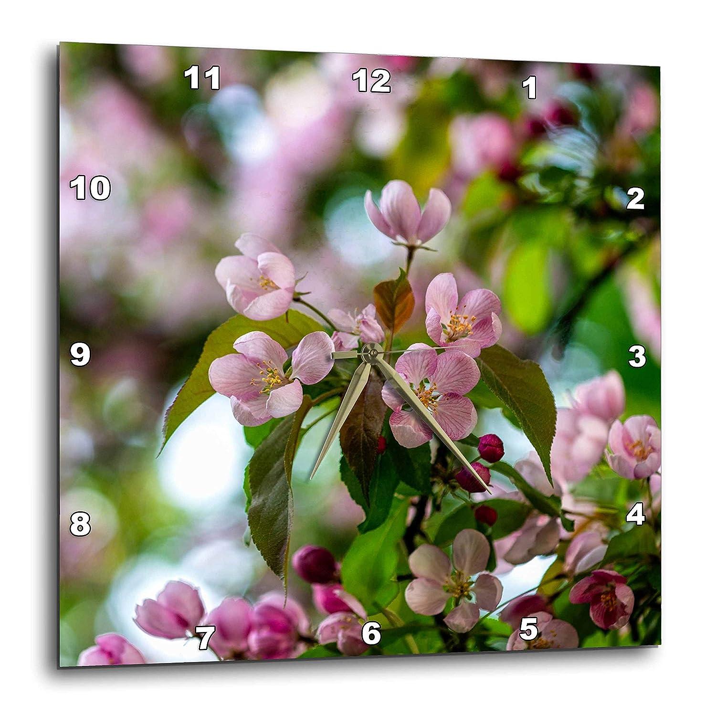 Amazon 3drose Alexis Photography Flowers Crab Apple