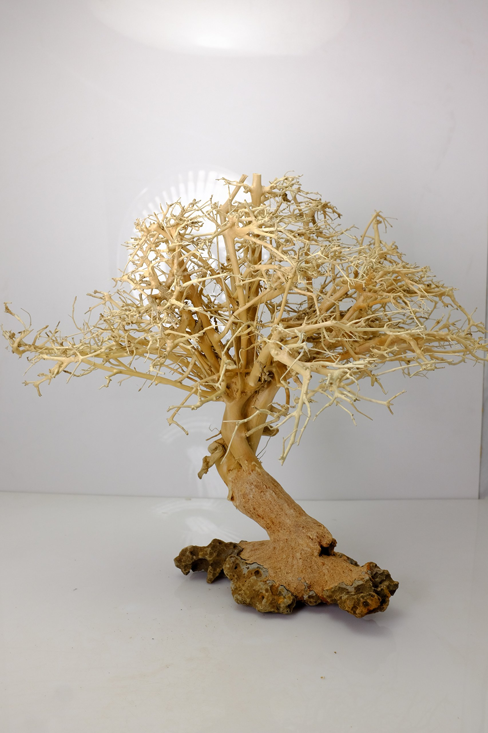 Bonsai Driftwood Aquarium Tree (12 Inch height) Natural, Handcrafted Fish Tank Decoration   Helps Balance Water pH Levels, Stabilizes Environments   Easy to Install by Bonsai Driftwood