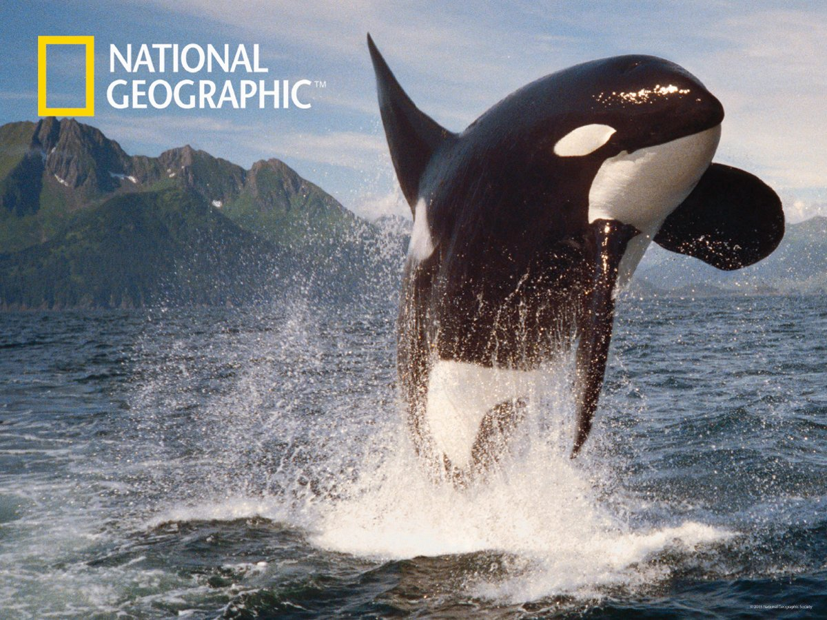 amazon com national geographic the ocean orca whale super 3d