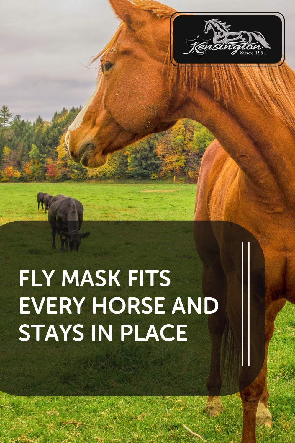 Kensington Signature Fly Mask with Removable Nose and Soft Mesh Ears /— Protects Horses Face Nose and Ears from Biting Insects and UV Rays While Allowing Full Visibility